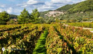 Cara, Korcula, Unforgettable Croatia