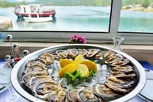 Oysters in Ston, Croatia