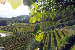Kozlovic winery, Istria, Croatia