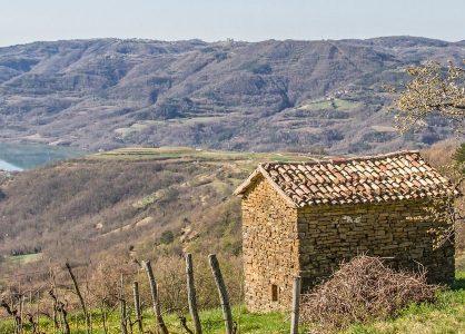 Croatian Wine Expert