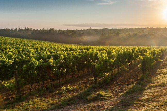 Croatia's Distinctive Wine Types
