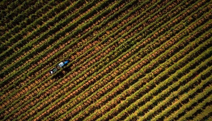 VillaMeneghetti vineyard