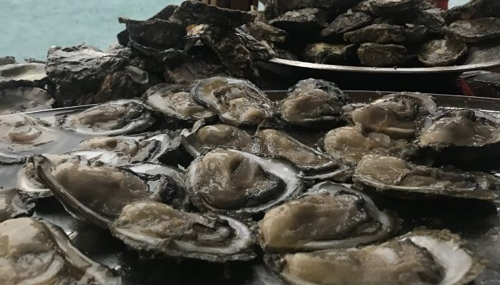 Ston, Oysters, Croatia, Unforgettable Croatia