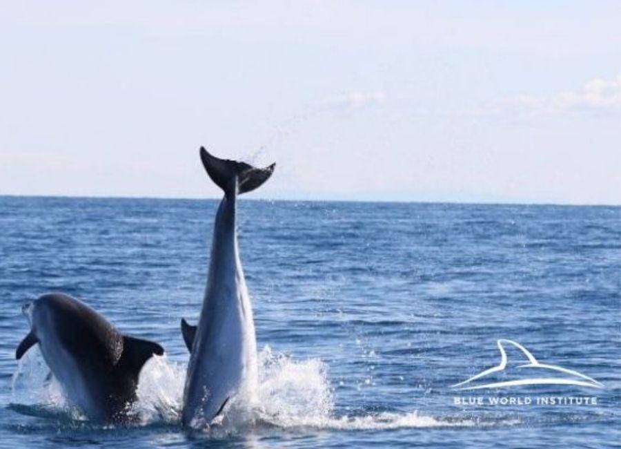 3_Croatia dolphins