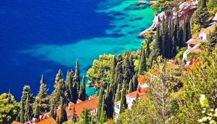 Cypress trees in Dubrovnik