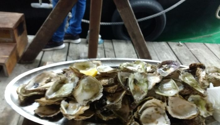 Oysters in Ston